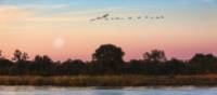 Beautiful birds flying over the Okavango River | Peter Walton