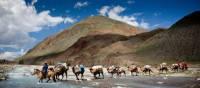 Camel crossing, Mongolia | Cam Cope